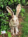 Hare under Sweet Olive by Tinka Jordy Art in the Garden Hillsborough NC 3674 (35303469634).jpg
