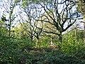 Hazel coppice with oak standards Hillcombe Coppice Dorset - geograph.org.uk - 276247.jpg