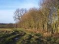 Hedge near Richley Farm, Stoke Lane - geograph.org.uk - 109457.jpg