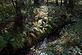 Herbstfarne am Würmseeweg im LSG Forst Rundshorn IMG 3098.jpg