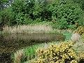 Hidden Pond by A41 - geograph.org.uk - 677295.jpg