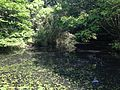 Hishigataike Pond in Usa Shrine 13.JPG