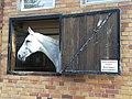 Horses in Düsseldorf - Gut Wolfsaap.jpg