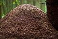 Huge anthill (4905269046).jpg