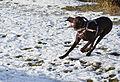 Hundebegegnungszone Kaprun 15.JPG