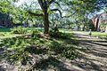 Hurricane Irene damage Brown University Providence RI.jpg