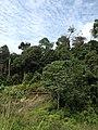 Hutan Alam Mandi Angin Minas Riau 01.jpg
