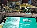 Hypsilophodon foxii cast.jpg