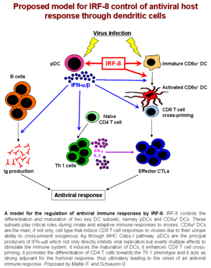 IRF8 - Image: IRF8 in host response