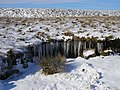 Icicles - geograph.org.uk - 321643.jpg