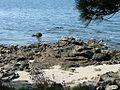 Illa de Arousa30 (3909079737).jpg