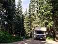 In the Woods (19988200435).jpg
