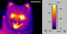 Immagine all'infrarosso di un cane, con relativa codifica dei falsi colori nelle scale Celsius e Fahrenheit.