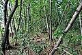 Interno del bosco.jpg