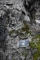 Ippocastano di Como Borghi - Il tronco con un numero di registrazione.jpg