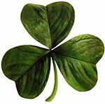 According to legend, St. Patrick used the shamrock, a three-leaved plant, to explain the Holy Trinity to the pre-Christian Irish.