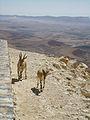 Israel DSC08387 (9540033804).jpg
