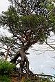 Jōdomatsu Ōsemachi Tadano, Kōriyama-shi, Fukushima-ken 963-0213, Japan - panoramio.jpg