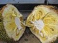 Jackfruit - ചക്ക കുറുകെ മുറിച്ചത്.JPG