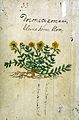 Japanese Herbal, 17th century Wellcome L0030070.jpg