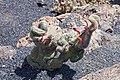Jardín de Cactus - Lanzarote - J02.jpg