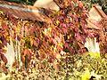 Jesiennie. - panoramio (1).jpg