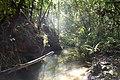 Jungle. Sarawak, Borneo. Malaysia (14766487031).jpg