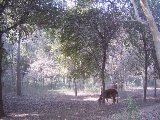 Jungle in Punjab