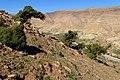 Juniperus oxycedrus kz28 (Morocco).jpg