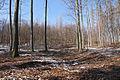 Křivoklátsko - Těžba dřeva IV..JPG