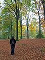 Kaapse bossen, tapijt van herfstbladeren.jpg