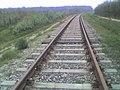 Kabaty Forest rail tracks.jpg