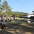 Kasuganocho, Nara, Nara Prefecture 630-8212, Japan - panoramio (13).jpg