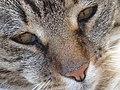 Kat - Katze - Cat - Chat - panoramio - Hänsel und Gretel (5).jpg