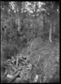 Kauri logs at Parkers Creek in the Piha area. ATLIB 287284.png