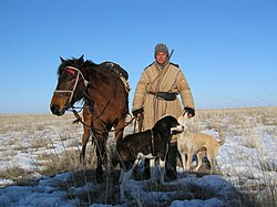 Kazakh shepherd, his and his dogs' primary job is to guard the sheep from predators.