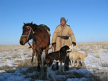 Kazakh shepherd man - his horse and dogs' primary job is to guard the sheep from predators. Kazakh shepard with dogs and horse.jpg