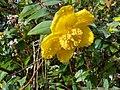 Keindahan Bunga yang mekar di Gunung Pangrango.jpg