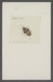 Kend - Print - Iconographia Zoologica - Special Collections University of Amsterdam - UBAINV0274 040 06 0056.tif