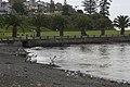 Kiama Downs NSW 2533, Australia - panoramio.jpg