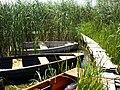 Kikötő a susnyásban - panoramio.jpg