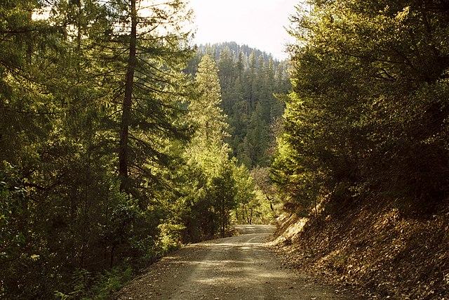Klamath Forest