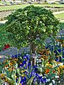 Klostergarten Seligenstadt Ananas Renette Apple.jpg