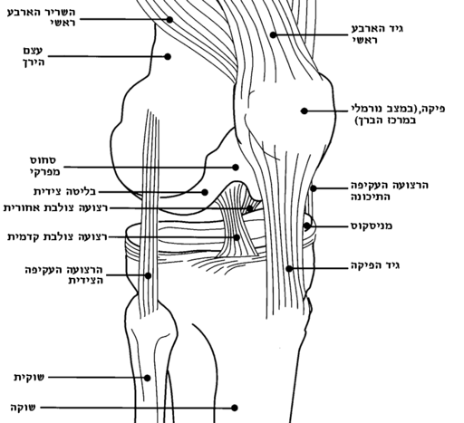 Knee diagram-he