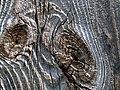 Knots - geograph.org.uk - 762901.jpg