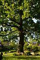 Kreis Pinneberg, Naturdenkmal 08-01 Appen 01.JPG