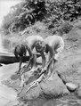 Kvinnor rensa Iguanaödlor, som dessa anse mycket läckra. Erh. av Erland Nordenskiöld 1928 - SMVK - 004014.tif
