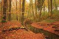 L 57 Stormsdorfer Bachtal (Wolfsberger Wald) (5) - Herbst - Stormsdorfer Bach - Buchen.JPG