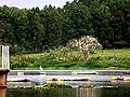 Lagoa do IFMG. - panoramio.jpg