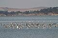 Lake Burrumbeet (24757167206).jpg